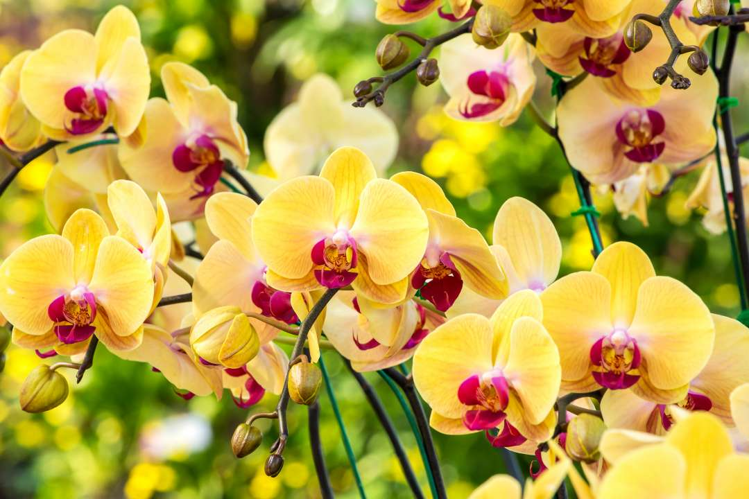 Orchidee verzorging tips